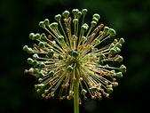 大自然美丽的植物图片