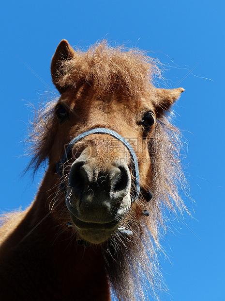 一个可爱的动物马