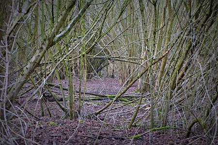 令人毛骨悚然的自然森林图片