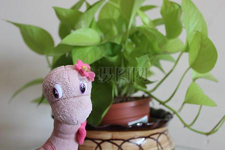 粉红色的小恐龙玩具图片