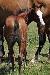 在草原回头看的马图片