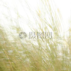 野生植物图片