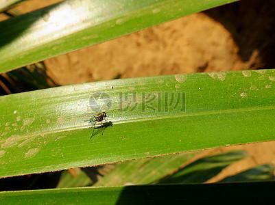 一片叶子上的昆虫图片