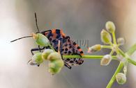 树枝上的甲虫图片