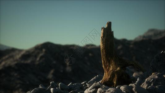 日落时花岗岩岩石上死松树图片