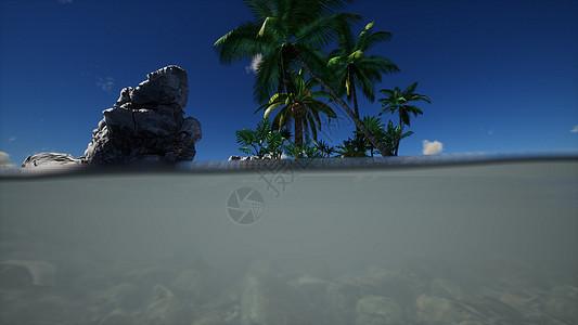岛上棕色泥泞的水棕榈图片