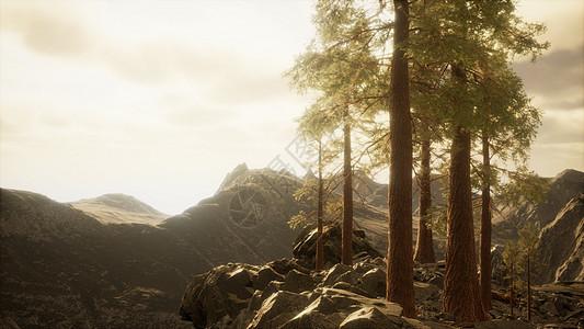 悬崖上有树阳光图片