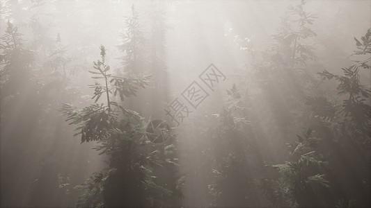 空中阳光森林中与雾图片