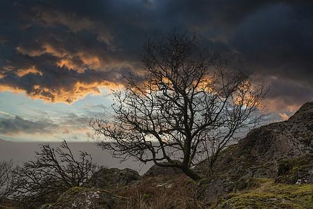 令人惊叹的裸树兰斯普图像与充满活力的戏剧性日落天空图片