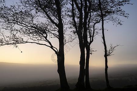 令人惊叹的裸树兰斯普,充满活力的戏剧性日落天空与雾滚动农村的背景图片