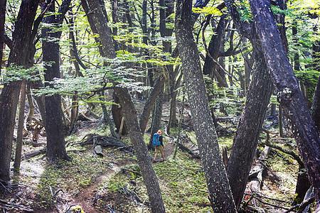 男人徒步旅行湾森林里的小径图片