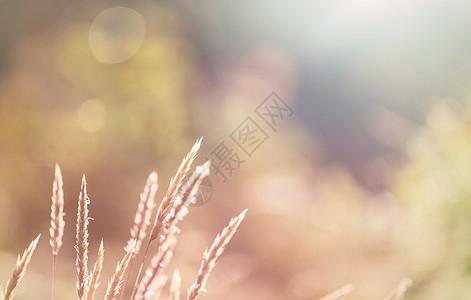 鲜花草地上阳光明媚的天美丽的自然背景图片