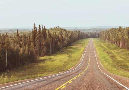 加大森林的高速公路夏季图片