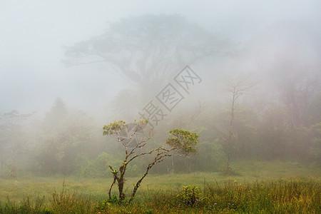 哥斯达黎加的宁静云森林图片