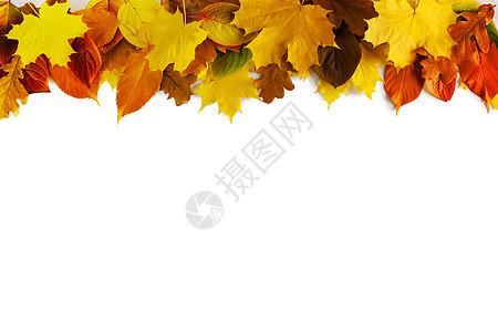 秋叶边框隔离白色背景上秋天的树叶框架图片