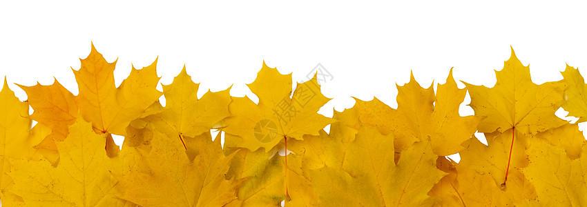 黄色秋叶框架隔离白色背景上的文本秋天的树叶框架图片
