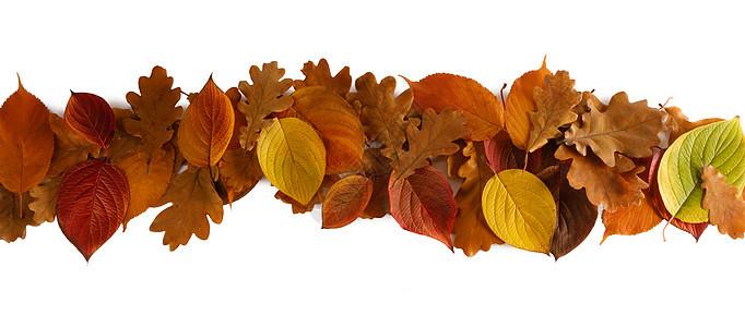 彩色秋叶条纹元素隔离白色背景上的文本秋天的叶子条纹图片