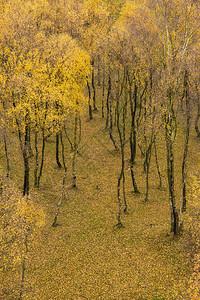 令人叹为观止的银桦林与金色的叶子秋季景观场景上佩德利峡谷英国的高峰地区图片