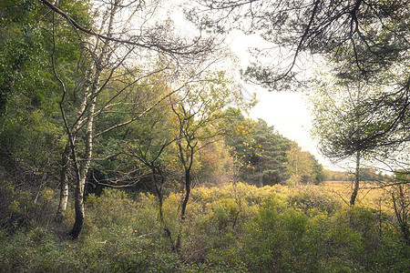 令人惊叹的秋天秋天秋天树木秋天的颜色英国的新森林与美丽的阳光,颜色流行黑暗的背景图片