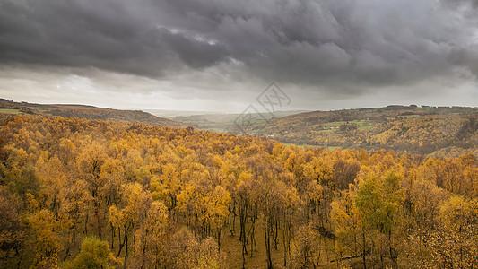令人惊叹的景色银桦林顶部与金色的叶子秋季景观场景的上帕德利峡谷英国的高峰地区图片
