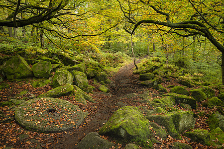 峰区森林磨石美丽生机勃勃的秋季森林景观形象图片
