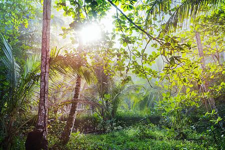 洲哥斯达黎加的薄雾雨林图片