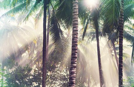 美丽的绿色热带丛林图片