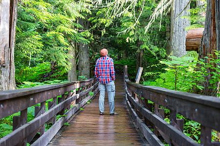 森林里的木板路图片