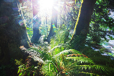 植被茂密的雨林图片