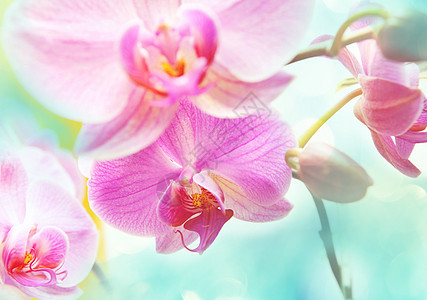 绿色夏林中的兰花花图片