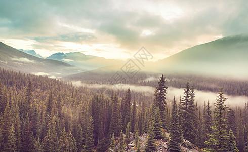 高山上的雾美丽的自然景观图片