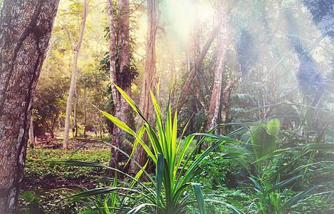 美丽的绿色热带丛林为自然背景图片
