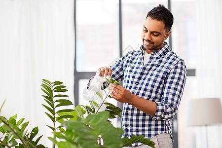 人,家务护理快乐的印度男人清洁家庭植物的叶子家里的纸巾印度男子清洁室内植物的叶子家里图片
