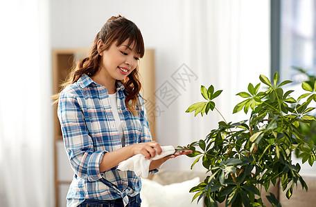 人家务护理快乐的亚洲妇女家庭主妇家用纸巾清洗室内植物叶子快乐的女人家打扫室内植物的叶子图片