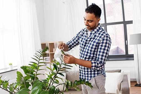 人,家务护理印度男子清洁室内植物的叶子家里的纸巾印度男子清洁室内植物的叶子家里图片