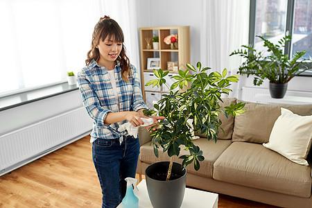 人,家务护理亚洲妇女家庭主妇用喷水器清洁家庭植物叶片家里的亚洲妇女家用纸巾清洗室内植物图片