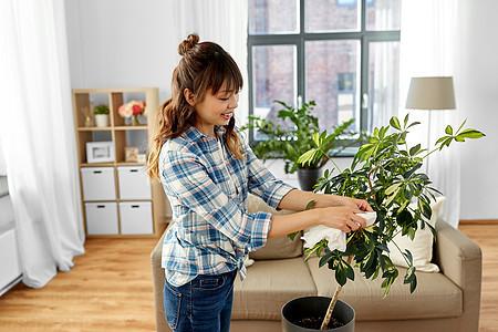 人家务护理快乐的亚洲妇女家庭主妇家用纸巾清洁室内植物的叶子快乐的亚洲女人家打扫室内植物图片