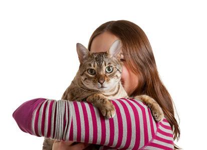 Bengal猫坐在年轻女人的肩膀上盯着镜头看在孤立的摄影棚拍展示宠物和主人之间的爱图片