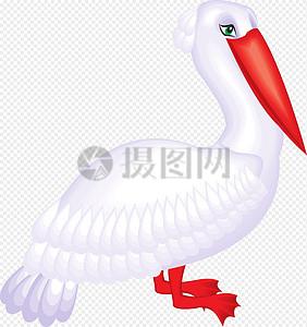 站立的红嘴海鸟图片