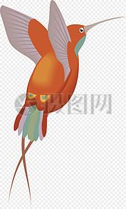 橙红色羽毛蜂鸟图片
