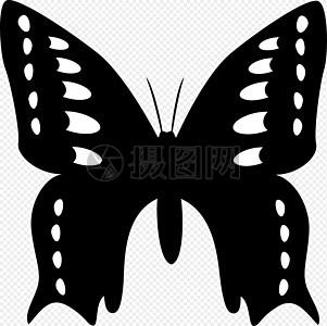 透明翅膀图片_透明翅膀素材_透明翅膀高清图片_摄图网