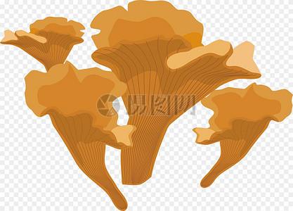 鸡油菌图片