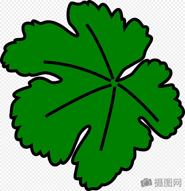 标签: 藤叶子葡萄绿色免费矢量图免费插画免费图片葡萄藤叶子图片