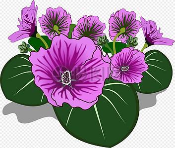 美丽的紫藤花图片
