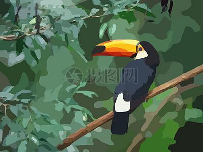 大嘴鸟, 鸟, 异国情调图片