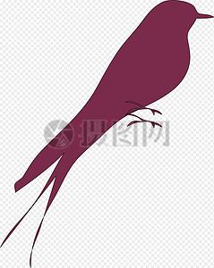 爱情鸟图片
