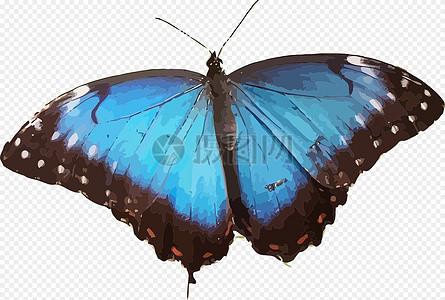 动物, 蝴蝶, 昆虫, 自然, 蓝色 , 免费矢量图,  免费插画,  免费图片图片