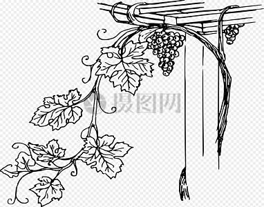 多汁水果葡萄矢量图图片