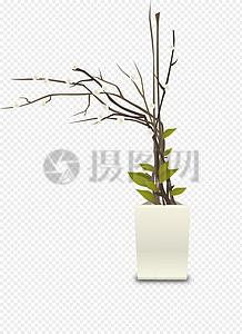 室内盆栽植物图片