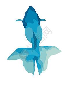 蓝色金鱼图片